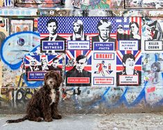 Rudi the Cockerpoo photographed by specialist dog photographer Emma O'Brien in Shoreditch, London.    #londondogs #cockerpoo #shoreditch #london #streetart #londongraffiti #londonphotography #londonphotoshoot #dogphotoshootideas #brexit