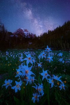 Languid Dream - Here's a second Milky Way image from backpacking on Mt. Hood last month. Aesthetic Pastel Wallpaper, Scenery Wallpaper, Aesthetic Backgrounds, Nature Wallpaper, Galaxy Wallpaper, Wallpaper Backgrounds, Aesthetic Wallpapers, Milky Way Images, Nature Aesthetic