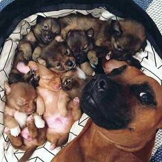 """""""Proud of her tiny puppies..."""""""