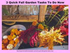 3 Quick Fall Garden Tasks To Do Now - Experimental Homesteader Exotic Gardening Thoughts http://experimentalhomesteader.com/3-quick-fall-garden-tasks-now-experimental-homesteader-exotic-gardening-thoughts/?utm_campaign=coschedule&utm_source=pinterest&utm_medium=Sheri%20Ann%20Richerson%20-%20Experimental%20Homesteader%20&utm_content=3%20Quick%20Fall%20Garden%20Tasks%20To%20Do%20Now%20-%20Experimental%20Homesteader%20Exotic%20Gardening%20Thoughts