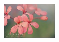 Floral Fine Art Print by LilyandLanePhoto on Etsy, $25.00