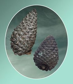 From The Pinecone Brochure - Yvonne Todd Contemporary Artists, Contemporary Design, Modern Design, Learning Logo, Still Life Photography, Artist At Work, Logo Design, Graphic Design, Herbs