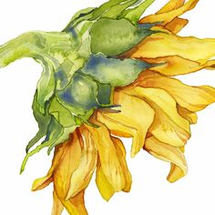 Sunflower watercolor painting by Cindy Lou Bailey watercolor illustration sunflower flowers Sunflower Drawing, Watercolor Sunflower, Sunflower Art, Abstract Watercolor, Watercolor Flowers, Watercolor Paintings, Watercolor Artists, Lemon Watercolor, Simple Watercolor