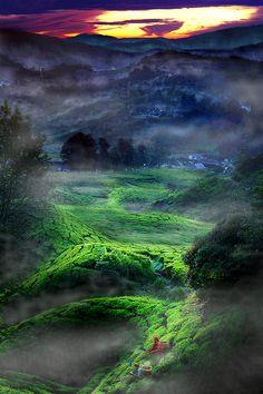 Tea farm.  Magical Tour | Amazing Pictures