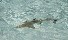 Ohne Haie sterben die Meere