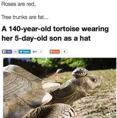 A 140-yr-old tortoise wearing her 5-day-old son as a hat