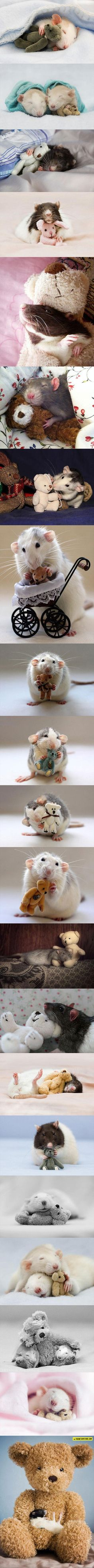 Cute Rats With Cozy Teddy Bears