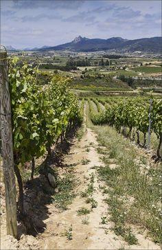 La Rioja, viñedos