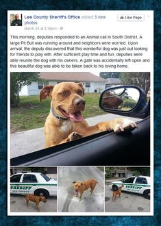 Some Police Officers Know How To Interact With Dogs
