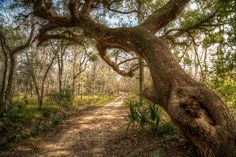Brazos Bend State Park in Needville, Texas