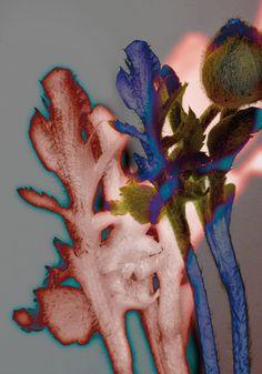 One of my favorite color palettes Bloom by Lidewij Edelkoort Bloom Magazine, Mark Making, Motifs Organiques, Motif Floral, Textile Prints, Botanical Illustration, Flower Art, Flower Crown, Beautiful Creatures