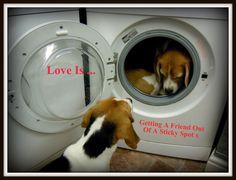 Love Is ... A Beagle A Border A Smile A Friend Needs Help When Stuck