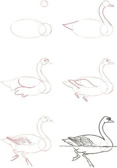Al guien sabe como se ve el cisne cuando nada a qui tienes la respuesta