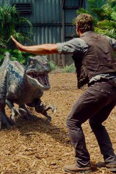 Chris Pratt Talks To Raptors In Terrifying New 'Jurassic World' Trailer Movie June 2015 Jurassic World Trailer, Jurassic World Chris Pratt, Blue Jurassic World, Jurassic World Movie, Jurassic Park Series, Jurassic World Dinosaurs, Jurassic World Fallen Kingdom, Michael Crichton, Science Fiction
