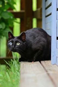 Black Kitty - Black and green are so pretty together.