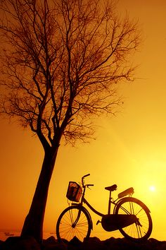 Bicycle and Tree Silhouette in the Sunset Sunrise Wallpaper, Nature Wallpaper, Sunset Silhouette, Tree Silhouette, Silhouette Photography, Bicycle Art, Bicycle Design, Mellow Yellow, Yellow Sun