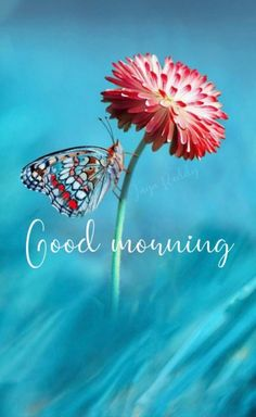 Good Morning Flowers Pictures, Good Morning Friends Images, Good Morning Nature, Good Morning Photos, Good Morning Roses, Morning Pictures, Good Morning Greeting Cards, Funny Good Morning Messages, Good Morning Wishes Gif