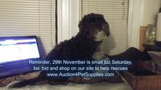 Lets make November 29 special, list today, shop on 29 November so that Rescue Organizations can have some extra cash for the Holidays.  #ShopSmall #rescue #shop #list #bid #sell #petsupplies #pets #dogs #cats #fish #birds #ferrets #rabbits #reptiles #shopbizsat www.Auction4PetSupplies.com