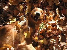dogs-and-leaves-640-10
