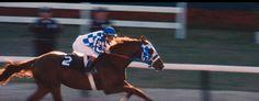 from Horses Forever. Secretariat, winner of the Triple Crown. via racinglegends.  starheart23