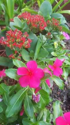 That's my beautiful flowers in Texas