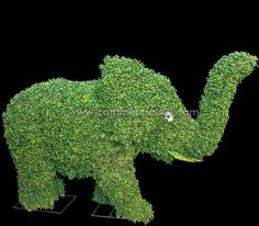 BOXWOOD ELEPHANT TOPIARY (EXTERIOR)