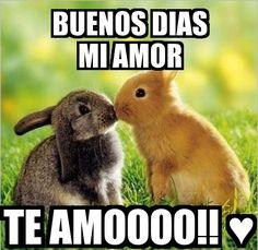 Memes, mem, and buenos dias: buenos dias miamor mem egenerator. Amor Quotes, Qoutes, Funny Quotes, Memes Amor, Amor Vintage, Simpsons Frases, Image Film, Some Bunny Loves You, I Love You