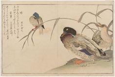 (Japan) Mallard Ducks and Kingfisher, from the album Momo chidori Myriad Birds by Kitagawa Utamaro (1753- 1806).