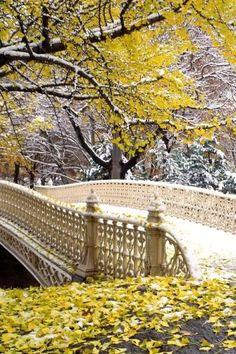Early Snowfall - Central Park, New York City, USA.