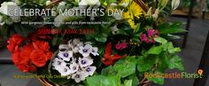 Mothers Day Flowers, Mothers Day Plants