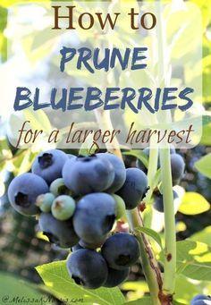 Fruit Garden, Edible Garden, Harvest Garden, Tropical Garden, Winter Garden, Organic Vegetables, Growing Vegetables, Organic Fruit, Eating Organic