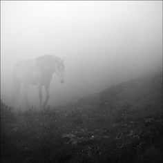 walking out of the mist - magical