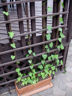 By Becca Badgett (Co-author of How to Grow an EMERGENCY Garden) If you're short on room to garden, take advantage of vertical spaces by growing annual vines. You can even find drought tolerant annual vines and annual vines for shade. Many flower prolifically and some are fragrant. Fast growing vines with showy flowers can also…