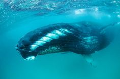 Diving with whales in Oman looks fun!