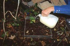 Earthworm Sampling Methods