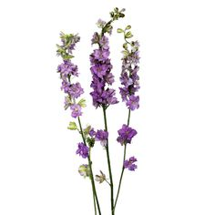 Add shape and definition to arrangements and centerpieces with Larkspur Lavender Flowers. Larkspur has a long stem covered in star-shaped, dainty blooms. Phlox Flowers, Lavender Flowers, All Flowers, Wedding Flowers, Fifty Flowers, Church Flowers, Beautiful Flowers, Pink And White Flowers, Yellow Roses