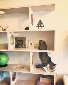 Cats love to climb, so take a moment to look at your existing furniture setup and see if you can create steps that your kitty can safely scale to find a satisfactory perching point. Age Chat, Diy Cat Enclosure, Cat Feeding Station, Cat Wall Furniture, Cat Wall Shelves, Cat Climber, Cat Playground, Cat Room, Buy A Cat
