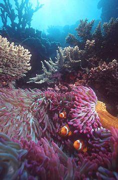 Saltwater Fish, Live Corals, Marine Invertebrates, Clams, Live Rock, Saltwater Aquariums & Supplies