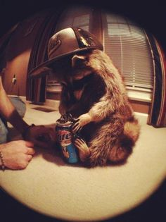 21 Totally Chill Animals That Know It's Five O'Clock Somewhere