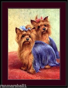 """English Picture Print Yorkshire Terrier Dog Duo Art  7.99  9x13"""" free shipping"""