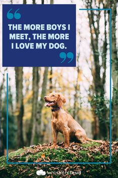 Custom Veterinary Websites, SEO, and Cloud Hosting Veterinarian Quotes, Ag Science, I Love Dogs, Animals And Pets, Seo, Marketing, Poster, Pets, Billboard