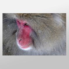 Check out our new canvases. We're adding 10-15 a week. Thanks to our wonderful artists.  Baboon Close Up #Canvas…