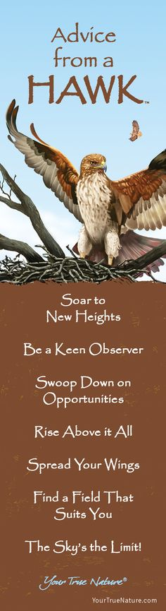 Advice from a Hawk: Rise Above it All! Your True Nature