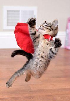 Super Kitten by Josh Norem £