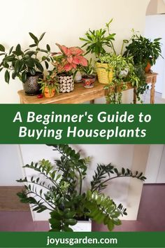 Choosing indoor plants can be confusing. These 14 tips for buying houseplants will help you, especially if you're a beginning houseplant gardener. Get tips on how to buy indoor plants. #howtobuyhouseplants #indoorplantsforbeginners Buy Indoor Plants, Easy Care Indoor Plants, Houseplants, Home Buying, Stuff To Buy, Indoor House Plants, Potted Plants, Custom Homes