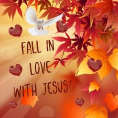 Truly falling in love with Jesus brings pure joy and abundant peace. However, we must be willing to offer Him prime time, not our leftover minutes. Giving God attention and spending time with Him is one way to show Him we love Him. God gives us His best; we should put forth no less in return.      I pray autumn rejuvenates and strengthens you, provides hope, love and energy to dig deep this season and grow so close to Him.  Stay close to Jesus, everything else will fall into place.