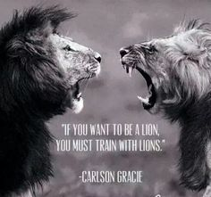 BE a lion, train with lions. You are what you surround yourself with.