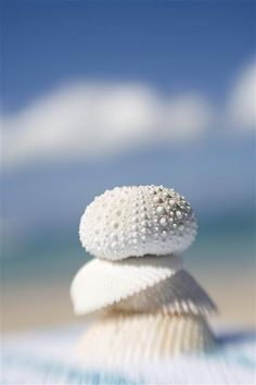 Ocean treasures, sea shells & sea urchins on the beach by the sea. For the BEST in coastal inspiration FOLLOW: http://www.pinterest.com/happygolicky/beach-beach-beach-off-to-the-coastal-chic-cottage-/