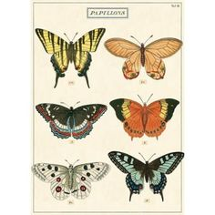Wrap gifts in beautiful butterflies. Great for wall décor, book covers, craft projects and gift wrapping, too! Printed on Italian acid-free paper. From Cavallini & Co.<br><br>Sheet size - 20 x