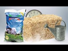 """Straw Bale Gardening"" video by horticulturist Melinda Myers. What is straw bale gardening and how to garden in bales without soil? Melinda talks about how to set up the bales, pretreat them, plant and fertilize. Hay Bale Gardening, Container Gardening, Straw Bales, Hay Bales, Garden Soil, Raised Garden Beds, Raised Bed, Vegetable Garden, Lawn Fertilizer"